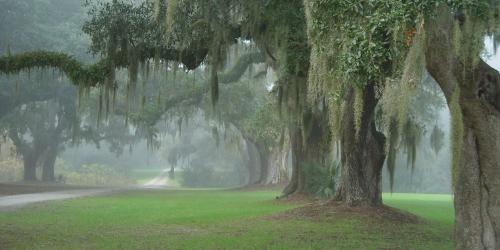 oak in South Carolina's
